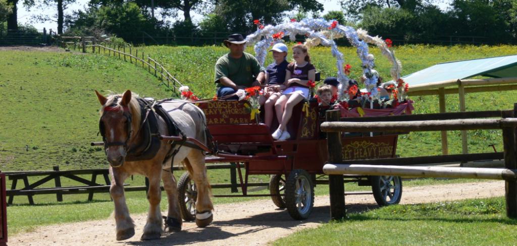Dorset Heavy Horse Farm Park and Rescue Centre