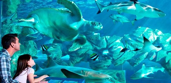 Bournemouth Oceanarium